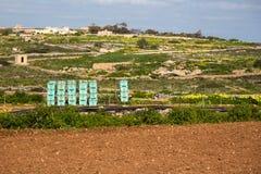Casse delle verdure a Malta Campagna maltese Fotografia Stock