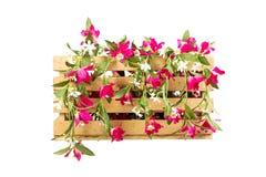 Casse di legno dei fiori Immagini Stock Libere da Diritti