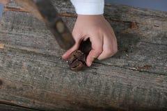 casse-noix Photographie stock libre de droits