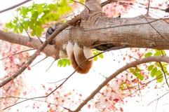 Casse rose, douche rose Image libre de droits