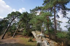 Pine trees and snadstone rocks in Fontainebleau forest. Cassepot rock in Fontainebleau forest Royalty Free Stock Photos