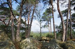 Cassepot rock panorama  in Fontainebleau forest. Pine trees and sandstone rocks in Fontainebleau forest Royalty Free Stock Image