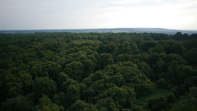 Casserole aérienne d'arbres clips vidéos