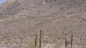 Casserole de l'Arizona, de désert, d'A et inclinaison de la montagne du sud environnante de désert, Phoenix banque de vidéos