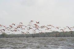 Casserole 3 du Surinam Bigi Photos libres de droits