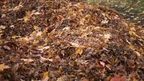 Casseroles de caméra plus d'à une pile des feuilles pendant novembre en automne banque de vidéos