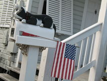 Cassetta postale con un gatto e una bandiera americana Fotografia Stock Libera da Diritti