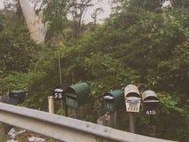 Cassette della posta nel cespuglio Fotografie Stock