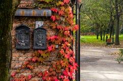 Cassette delle lettere in autunno Fotografia Stock