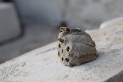 Cassez le nid d'un frelon de l'argile images stock