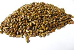 Cassia σπόροι Στοκ Εικόνα