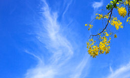 Cassia Fistula in clear blue sky Stock Images