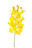 Cassia fistula flower isolated on white background Royalty Free Stock Photos