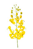 Cassia fistula flower isolated on white background Stock Photography
