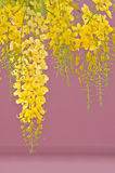 Cassia fistula flowers Stock Photography