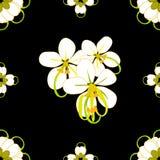 Cassia Fistula Shower Flower Immagine Stock Libera da Diritti