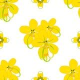 Cassia Fistula Shower Flower Fotografia Stock Libera da Diritti