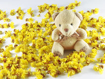 Cassia flower bear Royalty Free Stock Photography