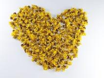 Cassia flower Heart Stock Photo