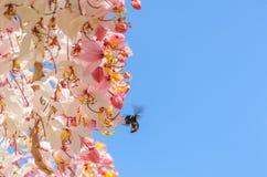 Cassia Grandis Flowers Arkivfoto