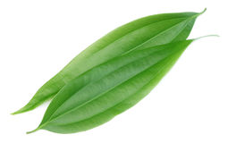 Cassia leaves. Green cassia leaves or Tej Patta of Indian subcontitinent royalty free stock photo