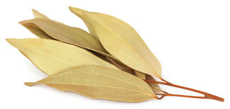 Cassia leaves. Over white background royalty free stock image