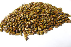 Cassia seeds Stock Image