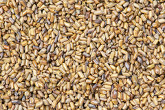 Cassia seeds. The background of Cassia seeds. A kind of Chinese traditional medicine stock images