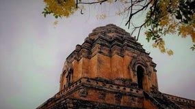 Cassiafistel som blommar med klar himmel och den gamla pagoden arkivfoto