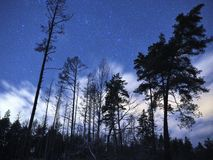 Cassiopeia constellation stars on night sky and clouds over winter forest royalty free stock image