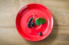 Cassis organique mûr frais dans le plat Photo libre de droits