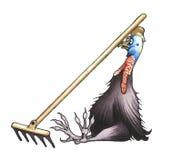 Cassowary. Сassowary has attacked a rake again Royalty Free Stock Photo