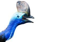 cassowary Royalty-vrije Stock Foto's