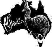 Cassowary as Australian symbol Royalty Free Stock Photos