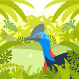 Cassowary on the Jungle Background Royalty Free Stock Photo