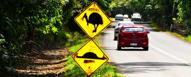Cassowary warning sign in Queensland Australia. Cassowary warning sign on a road in Daintree National Park in the tropical north of Queensland, Australia Royalty Free Stock Photos