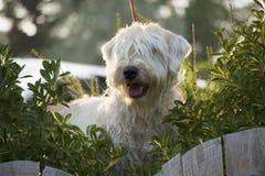 Cassy на собачьем патруле Стоковое Фото