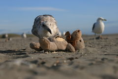 Cast aways and beach combers stock image