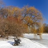 Cast iron bench ,red rowan , weeping willow in a city Park  on a  background of blue cloudless sky. Cast iron bench ,red rowan , weeping willow in a city Park Stock Photos