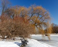 Cast iron bench ,red rowan , weeping willow in a city Park on a background of blue cloudless sky. Winter, clear Sunny weather Stock Image