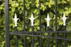Cast iron fence and beech hedge Stock Photos