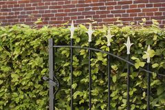 Cast iron fence and beech hedge Royalty Free Stock Images