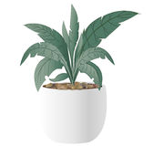 Cast-Iron Plant with pot. An illustration of a Cast-Iron Plant with pot Royalty Free Stock Image