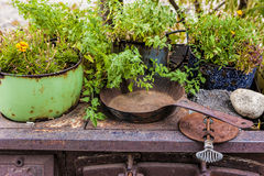 Cast iron and plants. Royalty Free Stock Photos