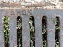 Sewer grate with enclosed plants, cement and gravel floor royalty free stock photo