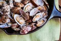 Cast iron skillet of Delicious Fresh Steamer Clams with Garlic a Stock Photos