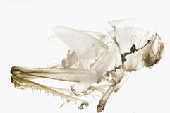 Cast off skin of a grasshopper Royalty Free Stock Photos