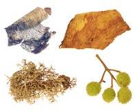 Castaña, liquen, árbol de abedul y madera aislados imagen de archivo libre de regalías