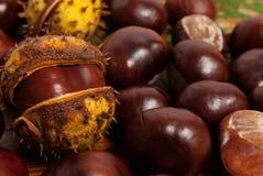 Castañas del otoño Foto de archivo libre de regalías