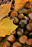 Castañas dulces Foto de archivo libre de regalías